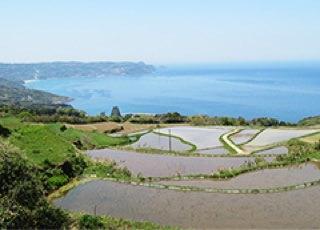 Yuya Terraced Rice Fields