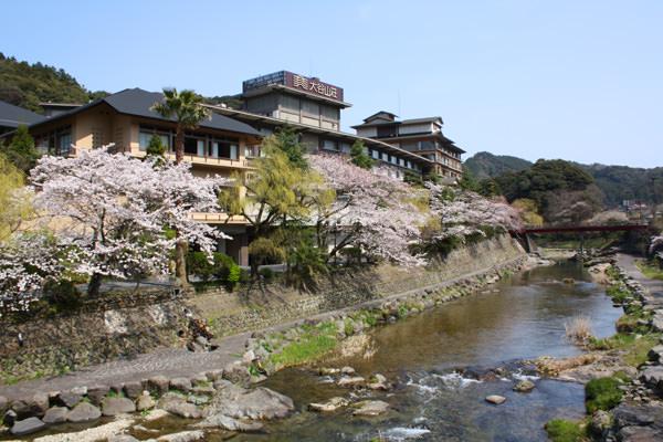 湯本温泉が桜に包まれました ~4月4日の桜開花状況~