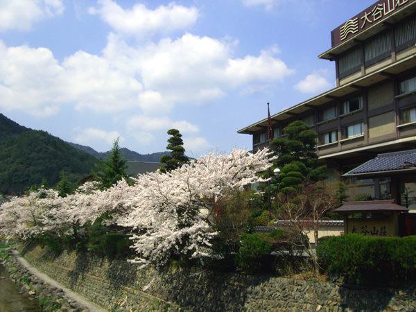 ~4月9日の桜開花状況~