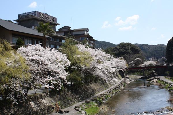 ~4月6日の桜開花状況~