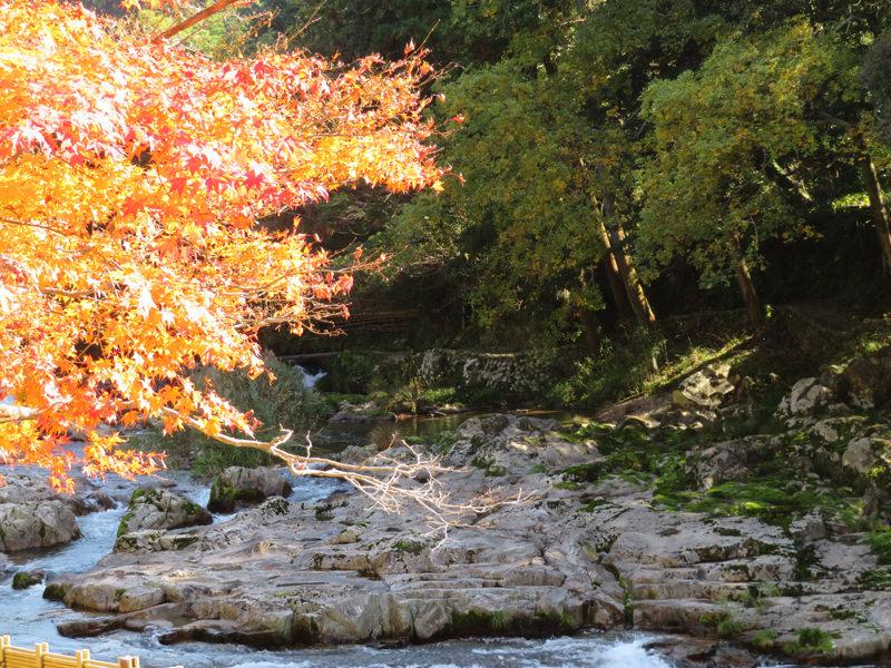 音信川沿いの紅葉