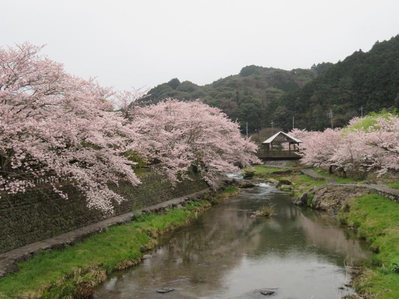sakura-otanisanso