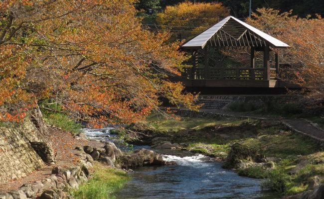 【周辺観光】長門湯本温泉の紅葉状況~大谷山荘の周辺・音信川の様子