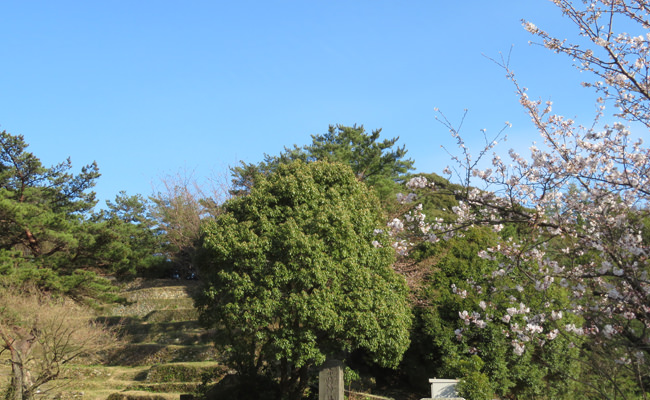 赤崎神社楽桟敷の桜