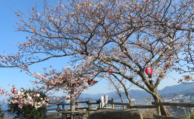 金子みすゞの桜