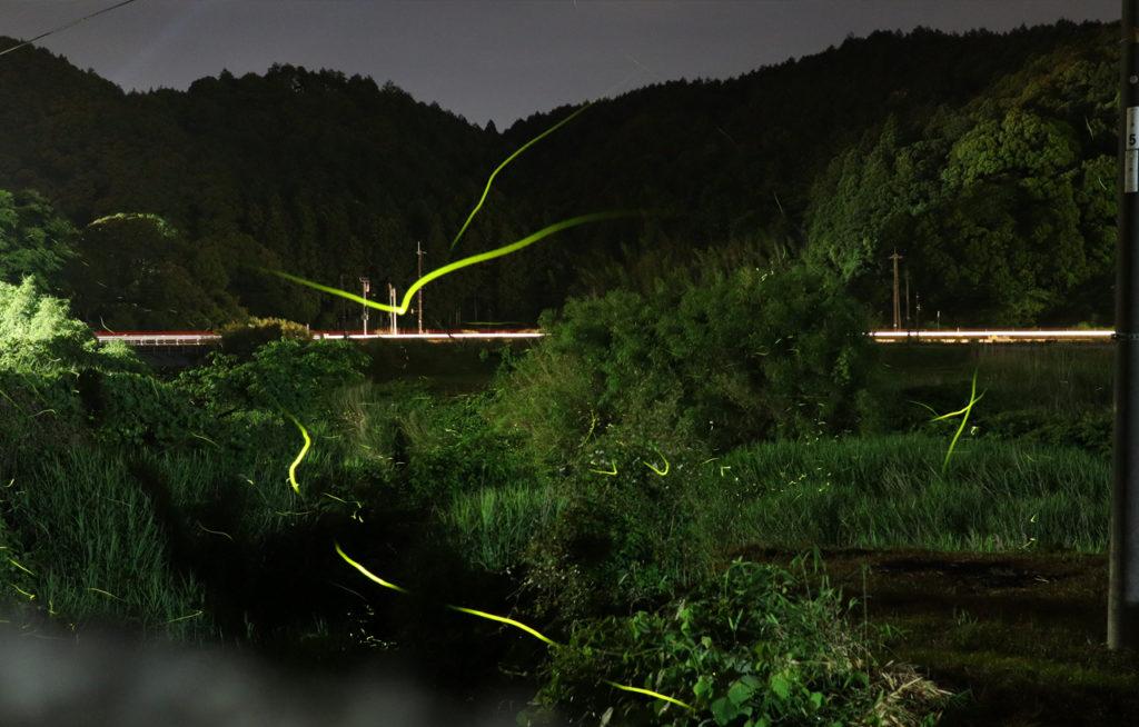 【夏の催し】夏の夜、長門湯本温泉でゲンジ蛍が舞う幻想世界を体験しませんか?(2020年5月23日~6月14日)