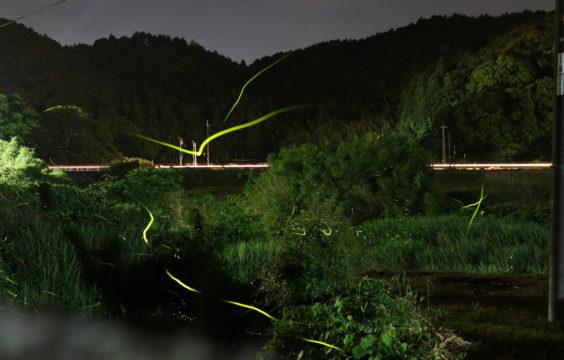 firefly-otanisanso-walk