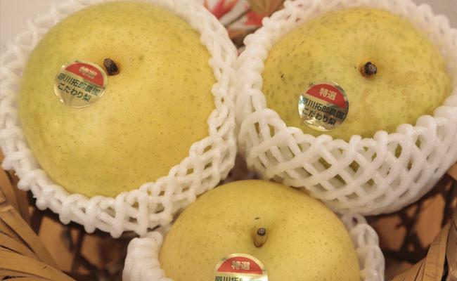 【山口お土産】今年もこだわりの秋味が届きました~「原川拓郎農園さんの梨」