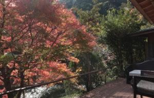 音信川の紅葉