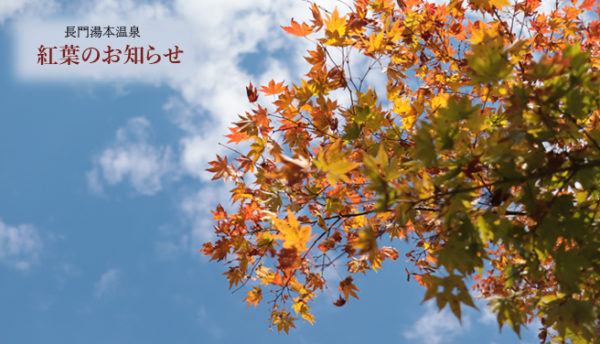 【山口観光】長門湯本温泉は紅葉の季節を迎えました