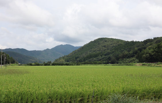 kawaharatakuro-farm