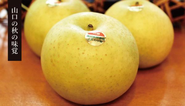 【山口お土産】産地直送でお届け!とれたて甘い果汁たっぷり「たくろう農園の梨」9月25日頃まで受付中