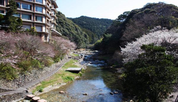 【山口観光】桜が開花しました。 大谷山荘前の桜情報~2020年3月25日