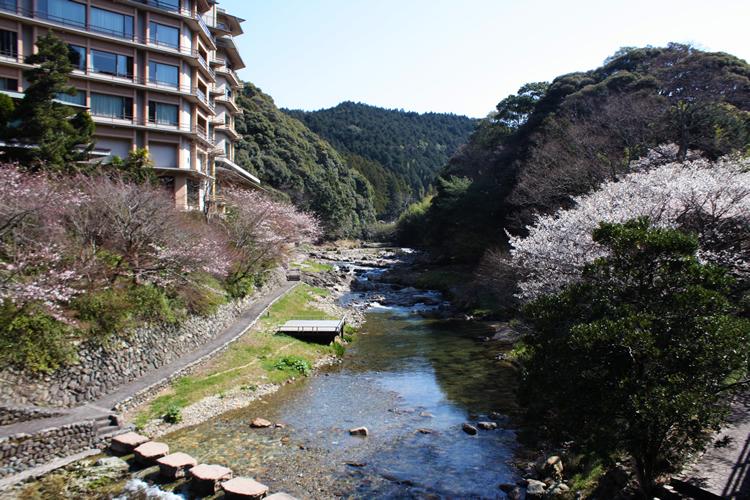 大谷山荘前、音信川沿いの桜