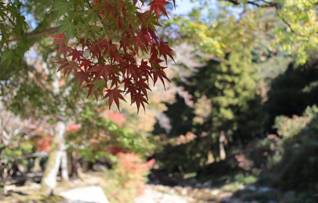 autumnleaves2_taineijitemple