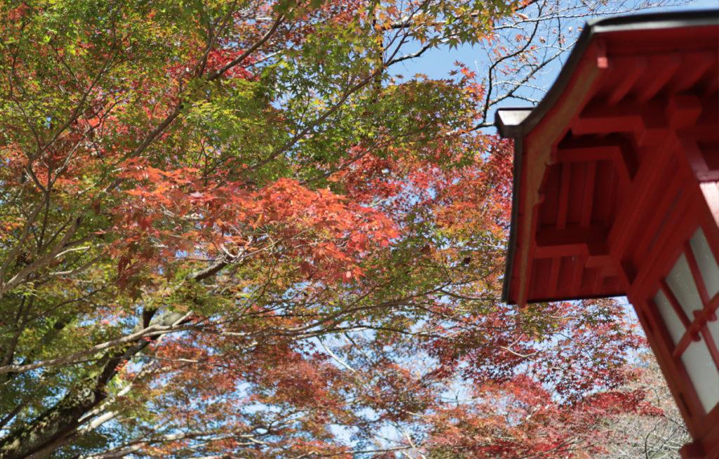 autumnleaves3_taineijitemple