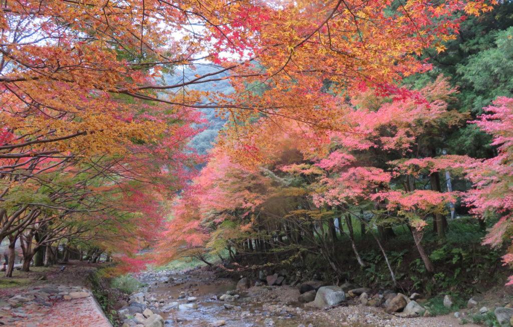 autumnleaves4_taineijitemple