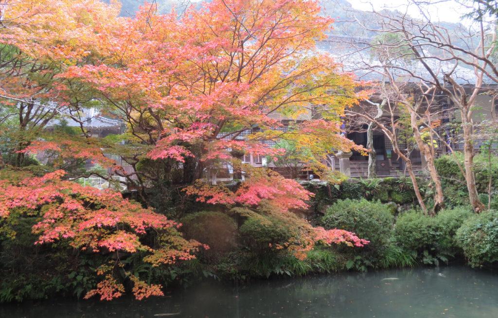 autumnleaves6_taineijitemple