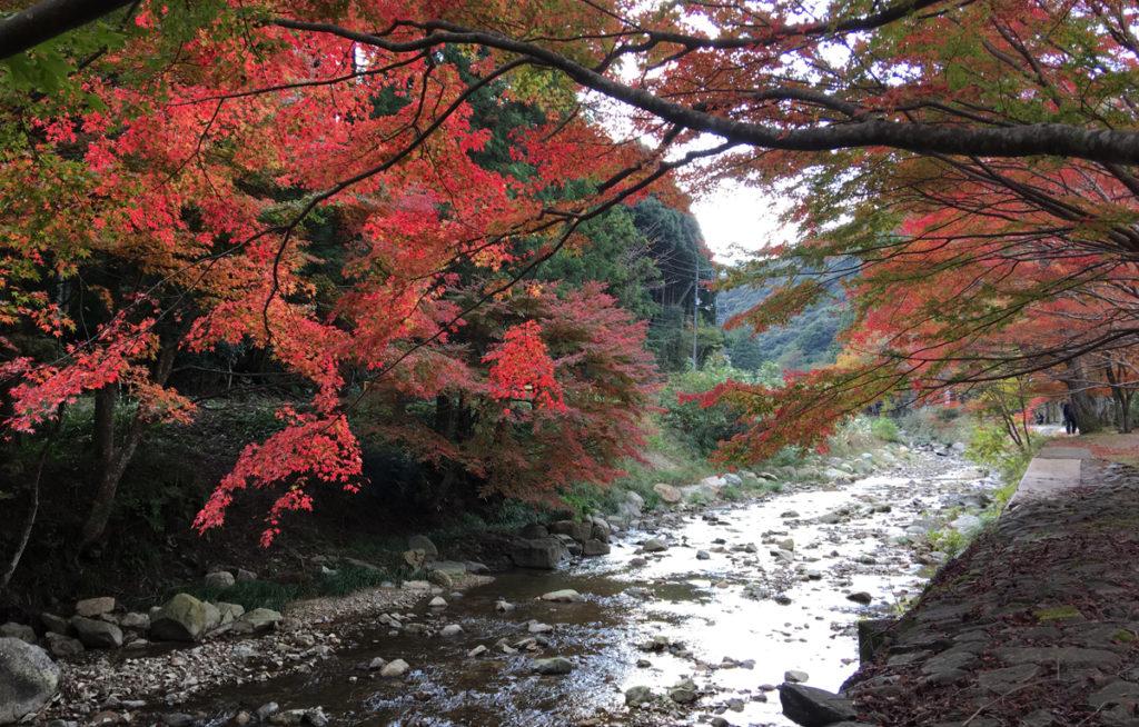 autumnleaves7_taineijitemple
