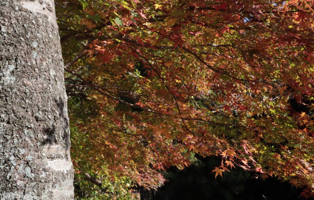 autumnleaves8_taineijitemple