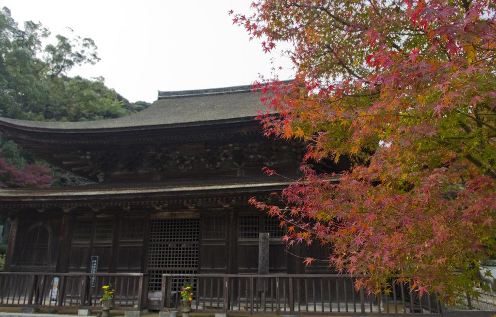 autumnleaves_kouzanji3_oidemaseyamaguchi