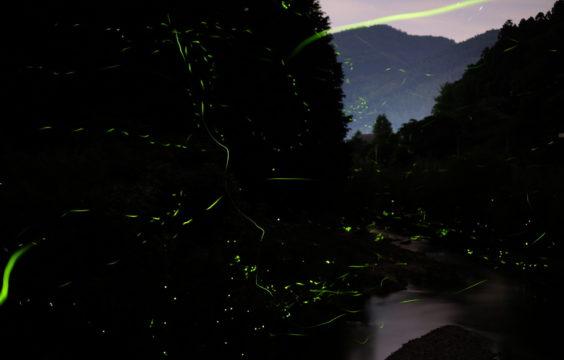 otozureriver-firefly