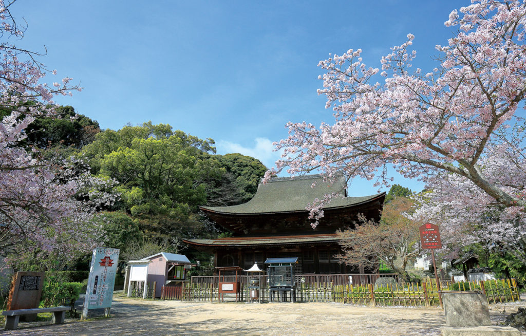sakura_kouzanji1_shimonosekisitourismpolicydivision