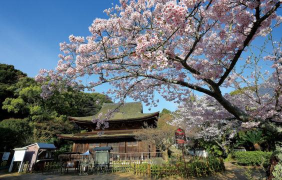 sakura_kouzanji3_shimonosekisitourismpolicydivision