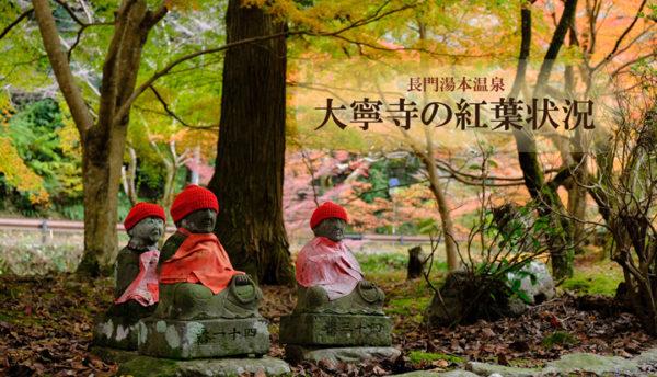 【山口観光】大寧寺の紅葉が見頃を迎えています。